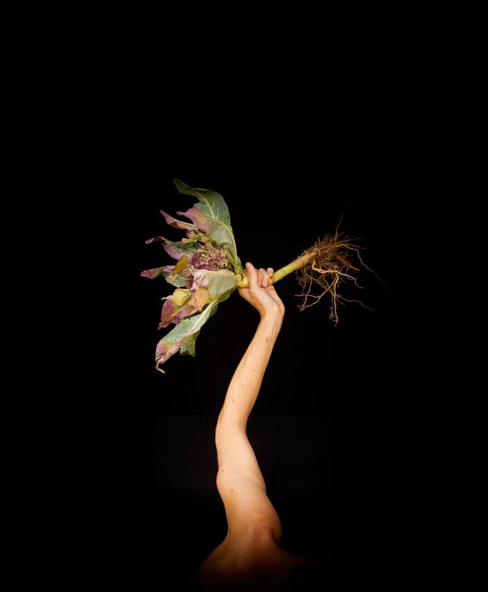 Alzar-puño-coliflor-Foto-Ana-Matey-2015