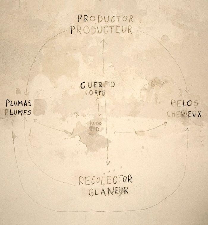 Grafica-recolector-ana-matey
